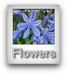 image with a shadow